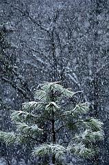 Kar Mûsıkîleri
