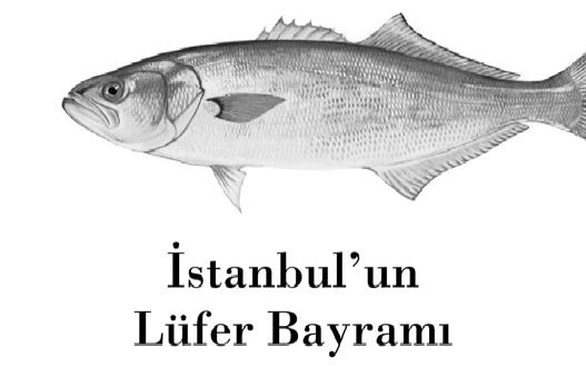 istanbul'un lüfer bayramı