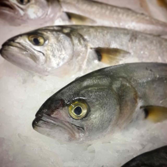 Balık Yağı ve Omega3 Kullanmak Şart mı?